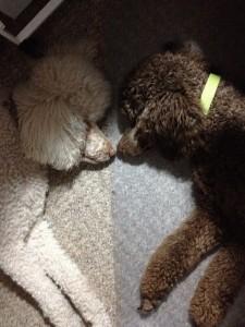 Chloe and Kona...my fur babies