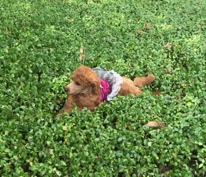 Lovin' the ground cover. Silly girl!